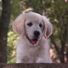 Napoleón, el perro de la película <a href=
