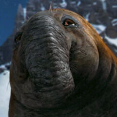 Elefante Marino en <a href=
