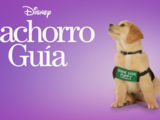 Cachorro Guía