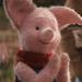 Piglet - CRRI