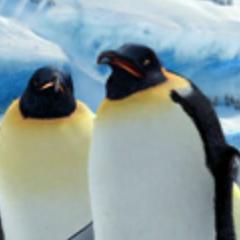 Pinguinos ancianos también en <a href=