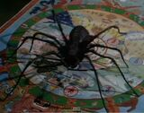 Planet of the Spiders (TV)