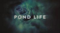 Pond Life (ouverture)