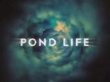 Pond Life (webcast)