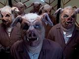 Schweinemenschen