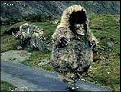 Yeti Walking