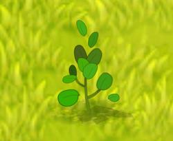 Wild Mint (plant)