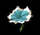 Flachsblüte