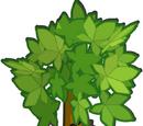 Beschützer der Bäume