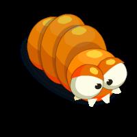 Orange Sickworm
