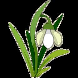 Snowdrop (plant)