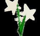 Sarraceno Eufórico
