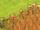 Malt (plant)