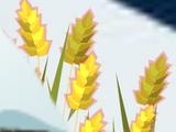 Emmer Seed