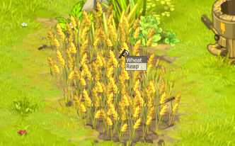 Wheat (plant)