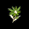 Margedelweiss