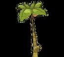 Kokoko