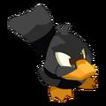 Black Quaquack