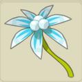 Dizbi Flower