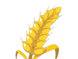 Harvestable Cereals
