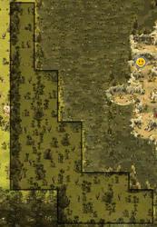 Kaliptus Forest
