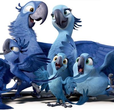 Spix Macaw Family (1)