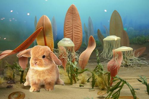 Image result for precambrian rabbit