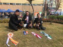 Chongqing dog Bamboo