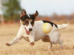 BALL!!!