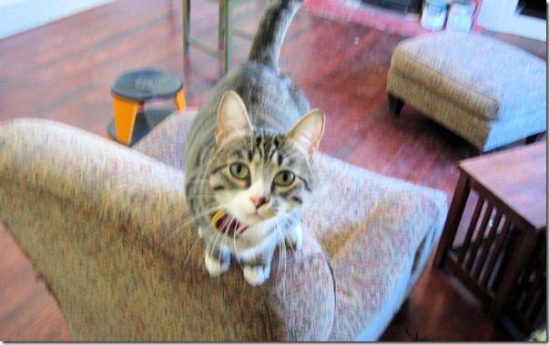 File:Cat in a living room.jpg