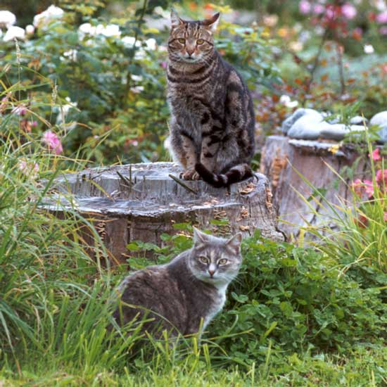 Marvelous Cats In A Garden