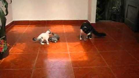 Gatos hermosos, parte 10.