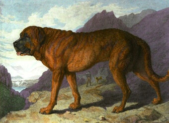 Alpine Mastiff Dogs And Cats Wiki Fandom