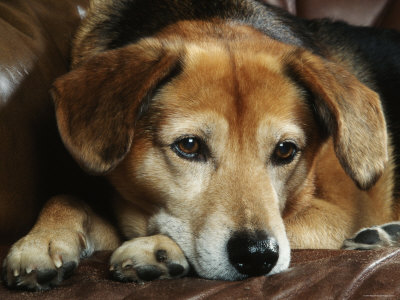 File:Mixed breed dog..jpg