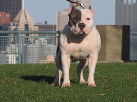 Dog-city-pic