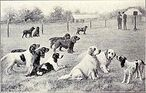 220px-Group of Gun Dogs from 1915
