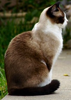 File:Pretty cat by hazyblitz.jpg