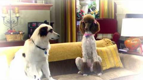 "Dog With A Blog - ""Stan Sleep Talks"" Sneak Peek"