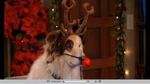 Stan con su traje de navidad