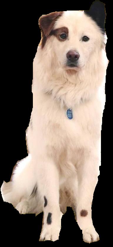 Stan Dog With A Blog Wiki Fandom