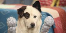 O-DOG-WITH-A-BLOG-facebook