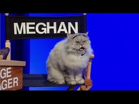 Meghan the cat