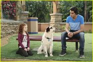 Dog-blog-makeovers-max-stan-stills-06