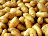 The Holy Potato