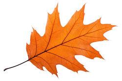 Leaf divider