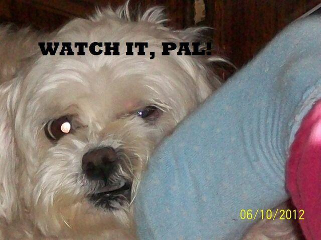 File:Watch it, pal!.jpg