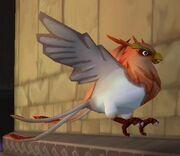 Male Bird of Paradise