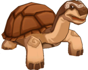 Hard Shelled Tortoise