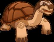 Hard Shelled Tortoise