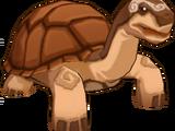 Hard Shell Tortoise